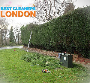 hedge-trimming-services